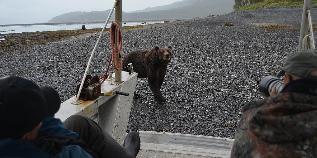 Bear Approaches the Boat