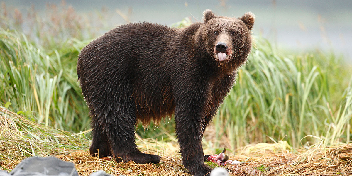 Alaska Wildlife Tours